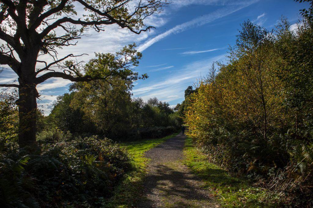 Het bos van Leith Hill