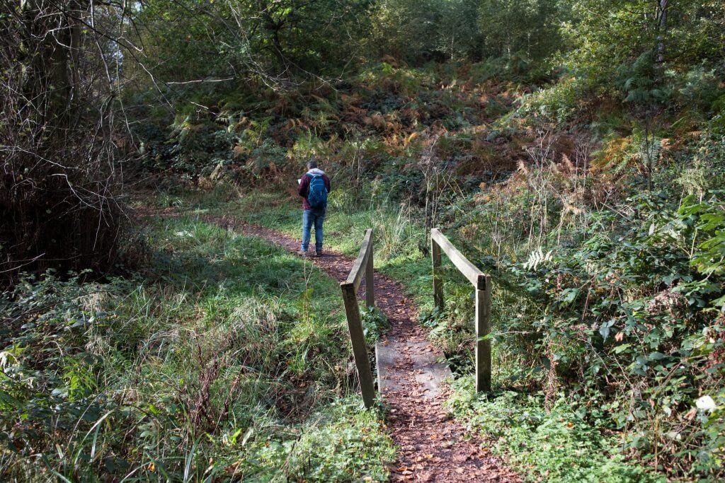 Leuke bruggetjes en doorgangen in het bos