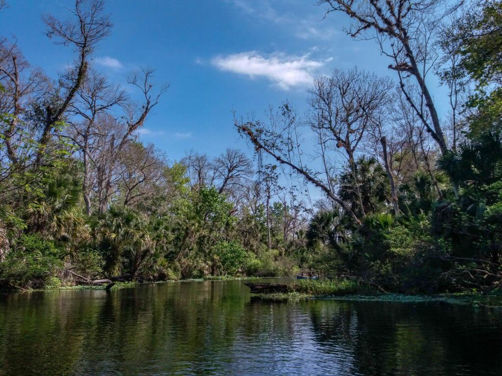 Een overzichtsfoto van de Wekiva rivier in Florida