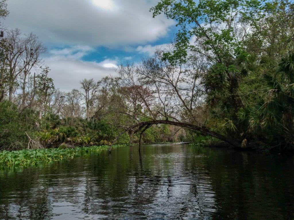 Op zoek naar alligators in de Wekiva rivier