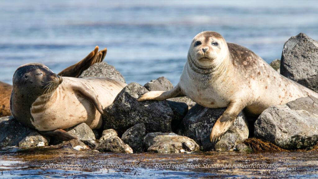 Als ze gerust zijn dat wij met onze boot geen vijanden zijn, durven ze rustig te soezen in de zon. Foto: Henk Straatman
