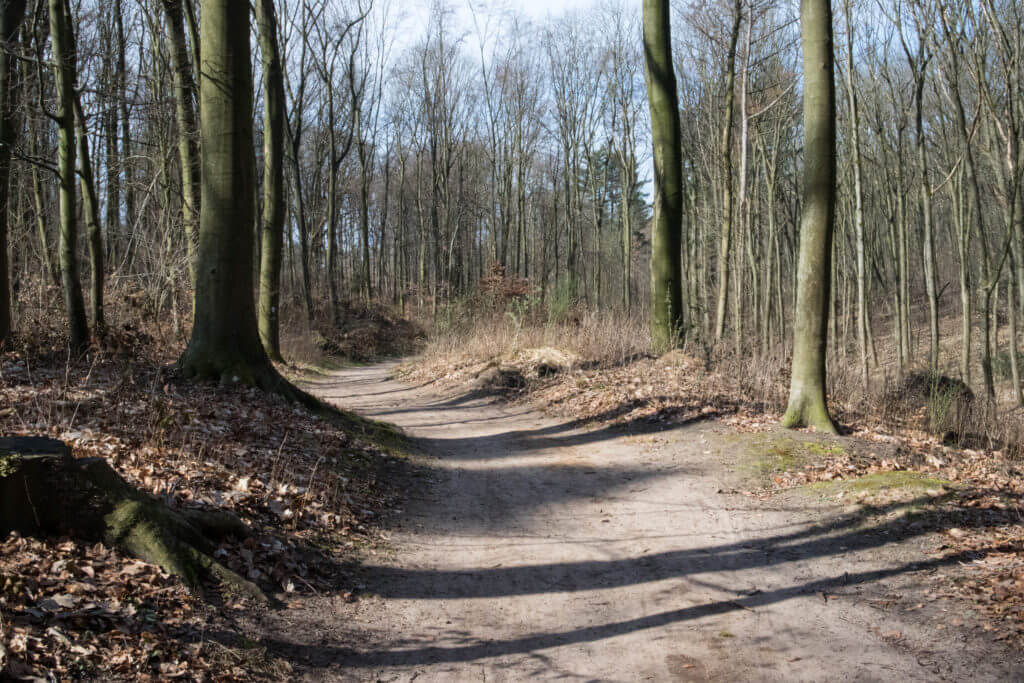 Het Aaper Wald is een gevarieerd bos in Düsseldorf