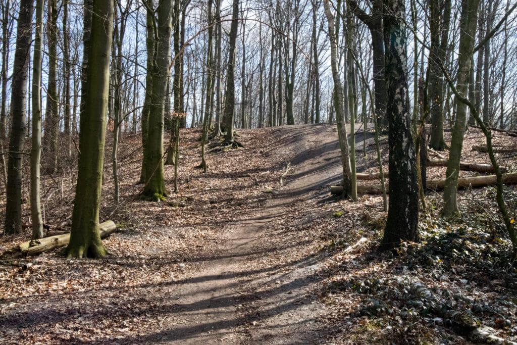 Aaper Wald Dusseldorf