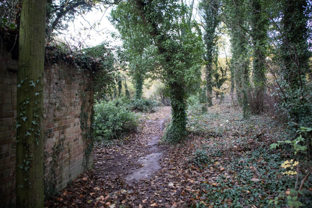Een oud en verlaten schuurtje in het bos
