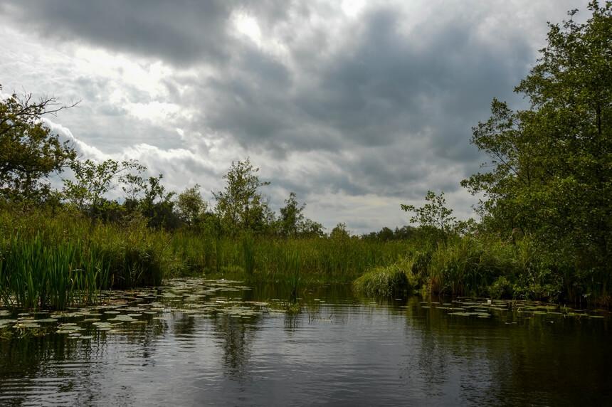 Rietvelden en water met alle flora en fauna die daarbij hoort in de Weerribben