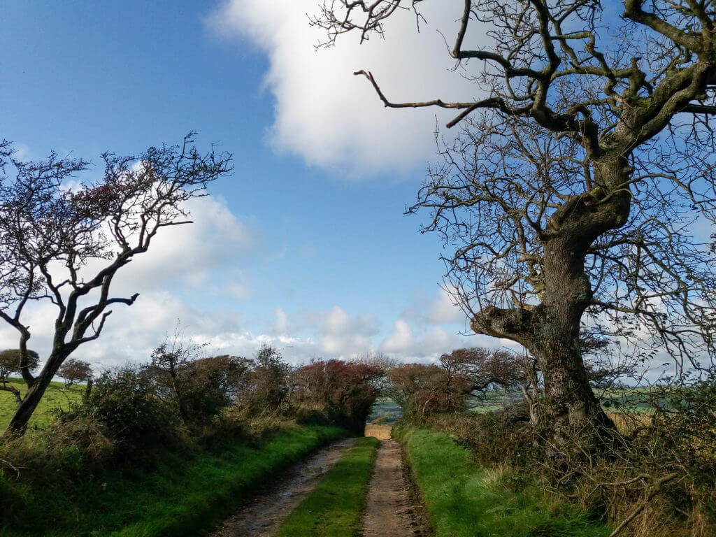 Wandelpad Park's Lane bij Abbotsbury