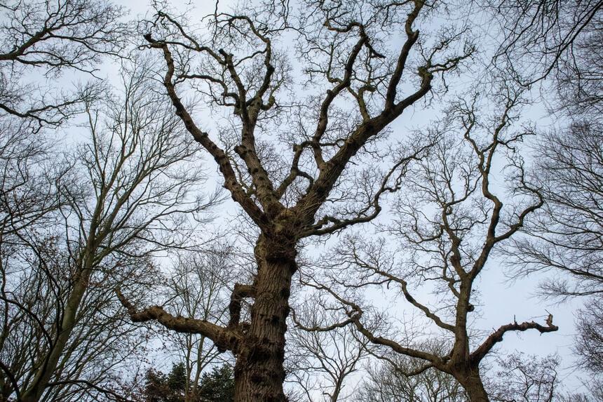 kronkelende bomen